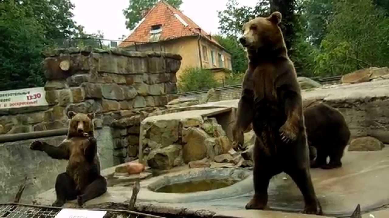 Калининградский зоопарк