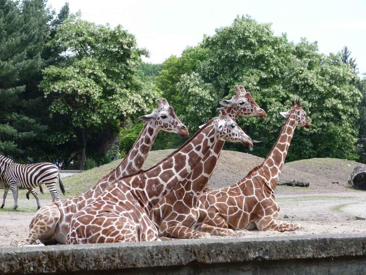 Зоопарк в Риме (Биопарк)