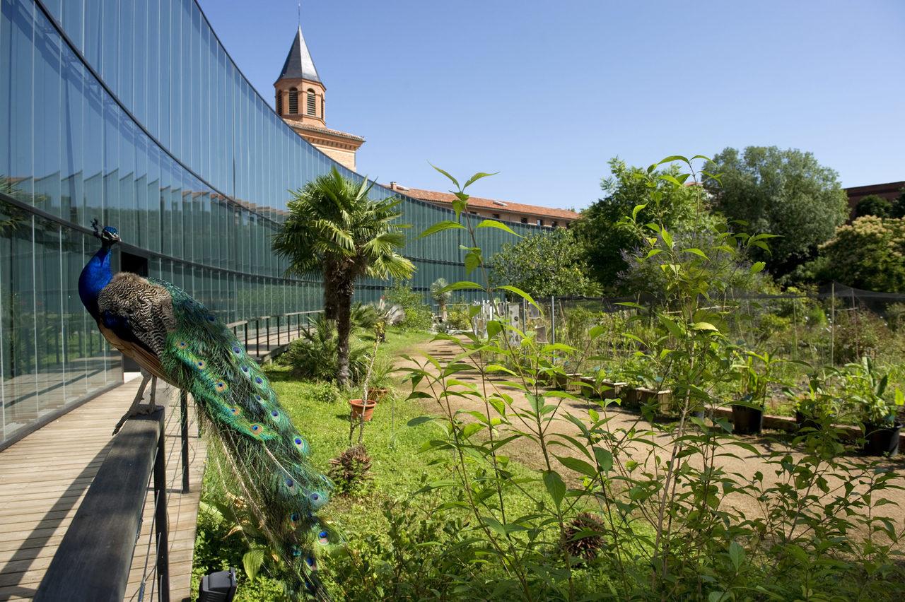 Тулузский музей, Тулуза
