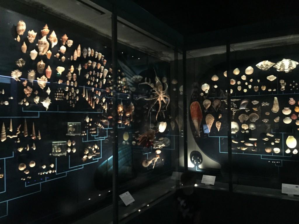 Тулузский музей