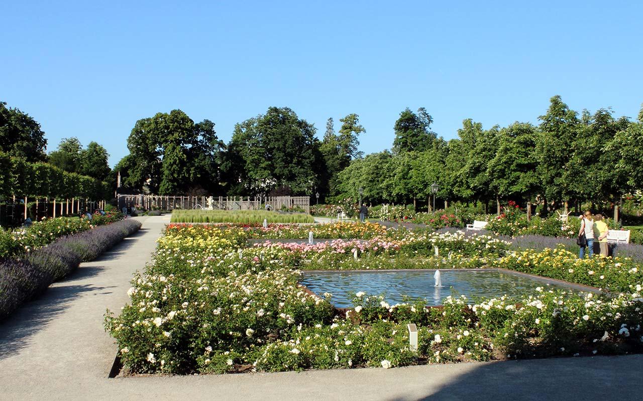 Розарий в парке Добльхоф